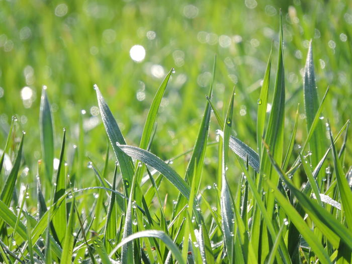 Beauty In Nature Close-up Day Drop Field Focus On Foreground Fragility Freshness Grass Grass Area Green Color Growth Nature No People Outdoors Plant Rain Drop RainDrop Water Wet