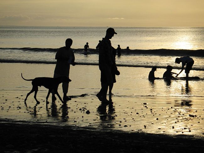 Beach Sea Silhouette Water Sand Nature Sunset Horizon Over Water Shore Dog Reflection Fun Sky Playing Leisure Activity Togetherness Outdoors Scenics Full Length Beauty In Nature