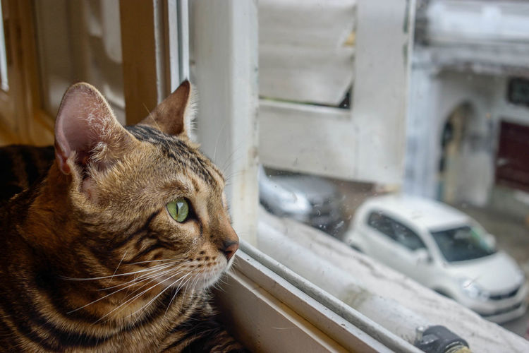 Animal Themes Car Cat Eyes Close-up Cozy Day Domestic Animals Domestic Cat Feline Focus On Foreground Green Eyes Homesick  Indoors  Land Vehicle Left Behind Looking Through Window Mammal Melancholy Missing You No People Nostalgia One Animal Pets Waiting Watching Pet Portraits