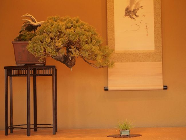 """TreePorn Bonsai Introducing Culture Of Japan Which Must Be Left To The Future…… """"未来に残す日本の文化"""""""