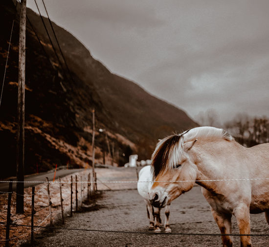 Horse standing on road against cloudy sky