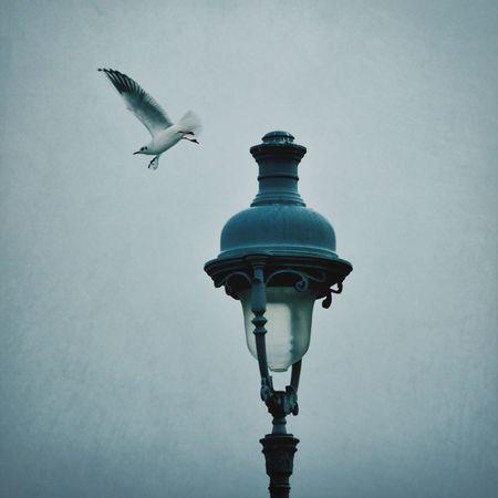 Bird Flying High Bird Paris