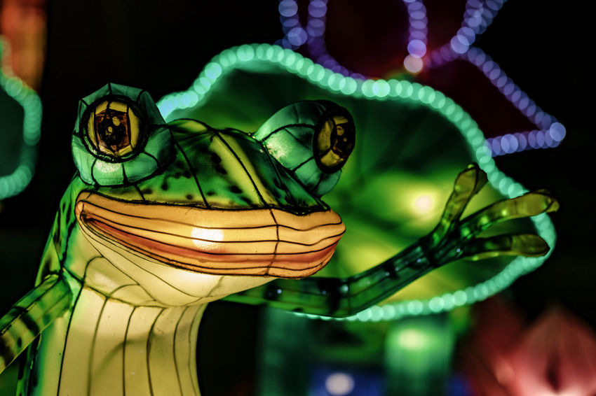 China Light Festival Frog Lantern Milwaukee Animal Representation Animal Themes Bookeh Close-up Focus On Foreground Green Color Illuminated Indoors  Multi Colored Night No People One Animal