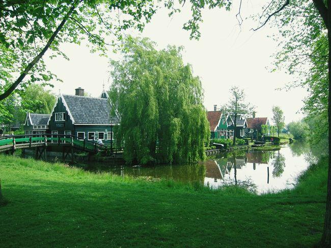 Zaandam Zaandijk Netherlands Farm Life Showcase July
