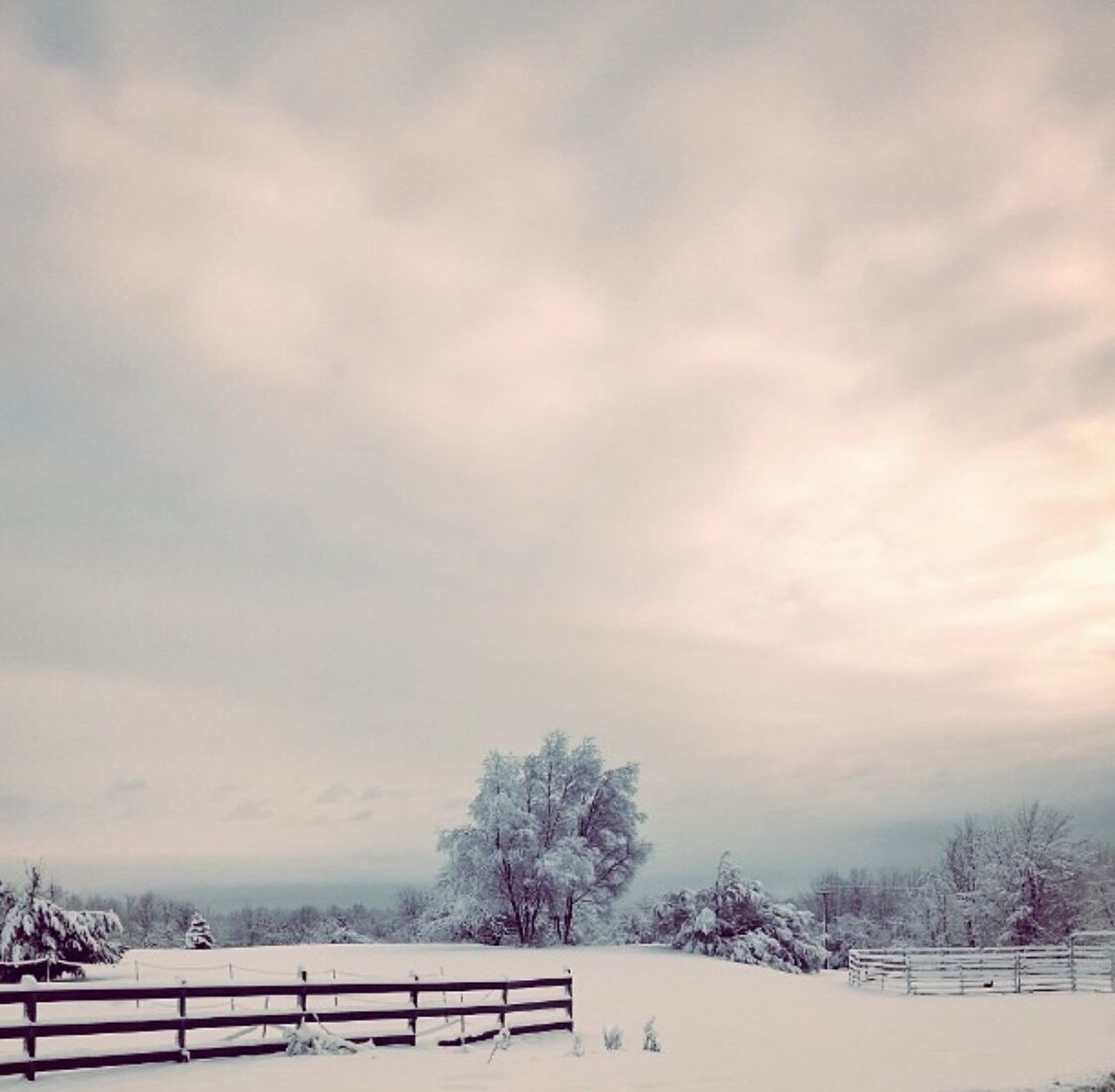 cold temperature, snow, winter, weather, nature, beauty in nature, sky, tree, cloud - sky, bare tree, tranquility, scenics, no people, outdoors, landscape, day