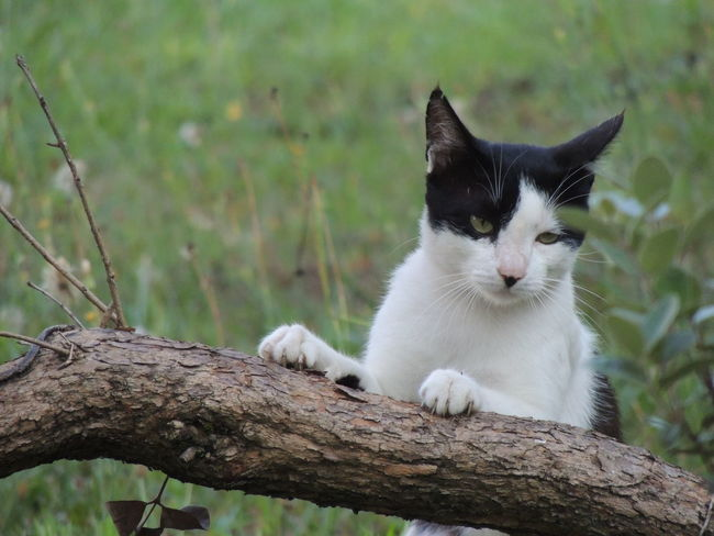 Animal Animal Themes Branch Cat Day Domestic Domestic Animals Domestic Cat Feline Focus On Foreground Mammal Nature No People One Animal Pets Plant Relaxation Sitting Tree Vertebrate Whisker