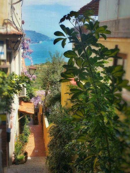 Beauty of a cursed land Sicily Taormina Blueskyandsea Wisteria Flowers Goldenlight Traveling TravelDestinations