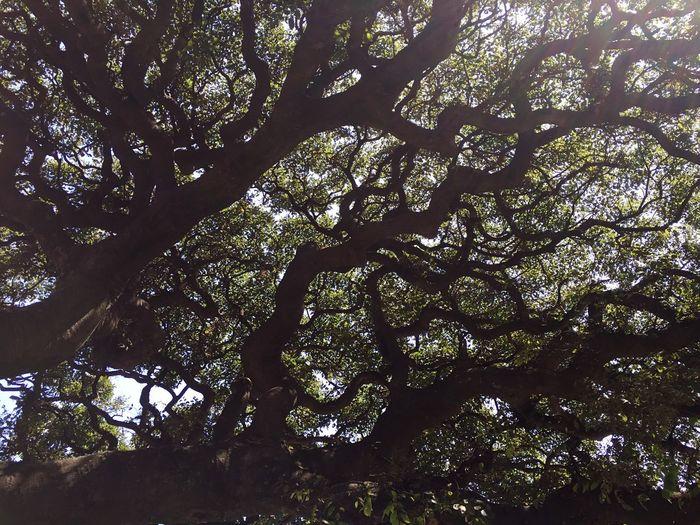 Tree Nature Low