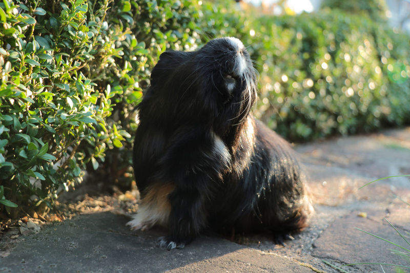 Portrait of a dog looking away
