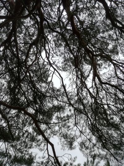 Branches EyeEmNewHere Tree Backgrounds Clear Sky Full Frame Upward View Twig Tree Canopy