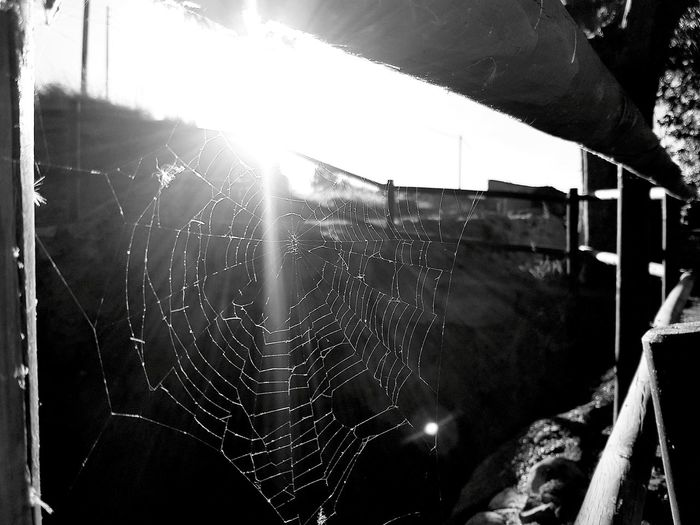 Water Built Structure Architecture Sunbeam Sunny Sky Day Outdoors Sun Lens Flare Splashing No People Laundry Spiderweb Spider Spider