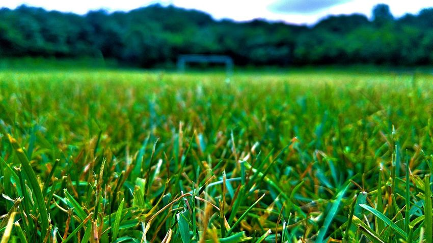 Pitch Eurotrip Eurocup  Football Soccer Nature Landscape Bulgaria Dulovo Grass The Color Of Sport September 14 2016