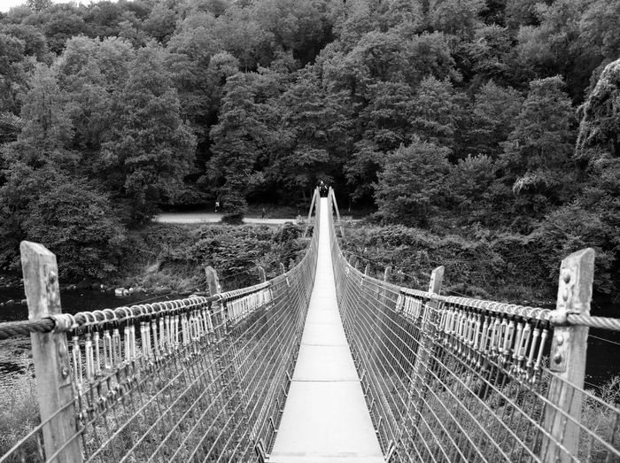 Bridge Footbridge Wye Valley Symonds Yat Blackandwhite Nature Landscape Travel Monochrome Trees