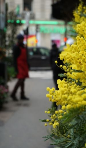 Yellow Yellow Flower Flower Shop Florist Mimosa Blurred Motion Business Finance And Industry Streetphotography Colored Background Street Life Streetphoto_color Flower Yellow Street Car Outdoors Transportation Adult City One Person Bouquet People Lifestyles Flower Market Freshness Real People Fragility Flower Head