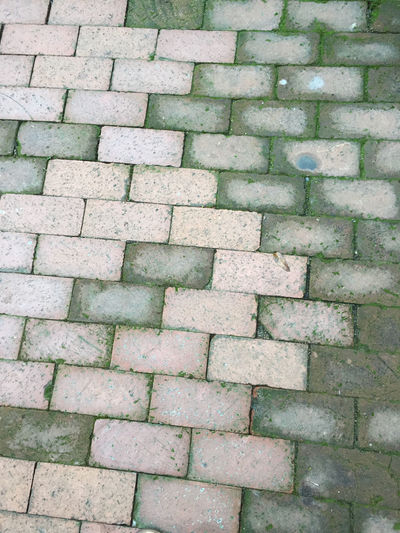 Algae Brick Brick Patio Damp Patio Pattern Textures And Surfaces