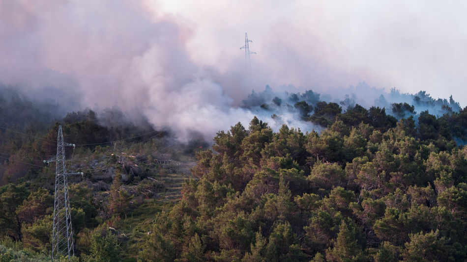 Forest fire at sunrise Burn Burning Catastrophe Croatia Dangerous Day Dry Season Electric Lines Fire Flame Forest Forest Fire Growth Haze Hot Landscape Mountain Nature No People Outdoors Pine Tree Smoke Smoke - Physical Structure Summer Tree