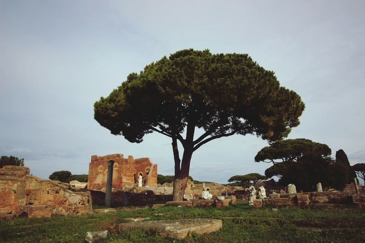 Single Object Single Tree Ancient History Ancient Ancient Architecture Ancient Rome Pine Tree Italian Landscapes Historic Historical Place Ruins Ruins Architecture Ruins Architecture Roman One Tree One Tree Ancient Civilization Old Ruin Ancient Ancient History History Sky Grass Cloud - Sky Architecture Single Tree Civilization Abandoned