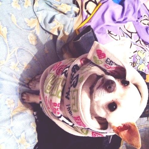Dogs Mydog My Dogs Are Cooler Than Your Kids Cheese! Te amo, mexicano.