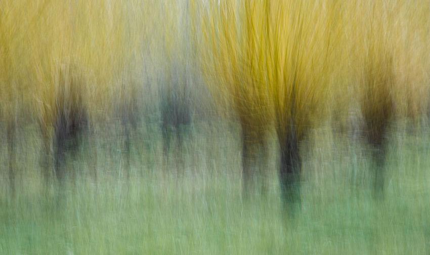 Full frame shot of wet yellow water