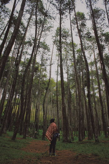 Lost in Forest Tree Agriculture Full Length Standing Forest Tree Trunk Sky Bamboo Grove Farmland Bamboo - Plant Growing Treelined Cultivated Land Leaf Vein Ear Of Wheat Plantation Stalk EyeEmNewHere