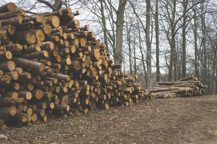 Pile of chopped tree trunks in winter forest Tree Forest Lumber Industry Timber Stack Deforestation Log Firewood Land Large Group Of Objects Wood Wood - Material Nature Abundance Woodpile Environmental Issues Field Heap Day Plant No People Outdoors WoodLand