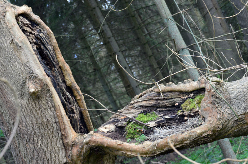 Close-up of dead tree trunk in forest