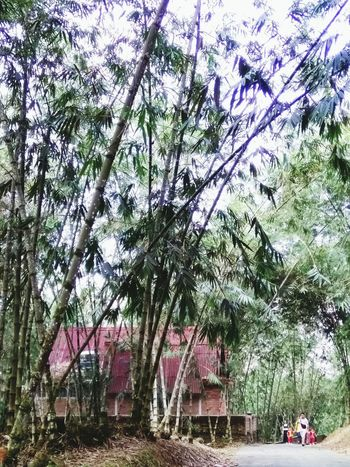 Kulai ,Johor Bahru,Malaysia Tree Day Outdoors No People Nature Sky