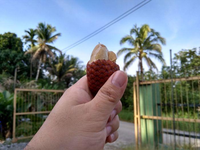 Jungle fruit...
