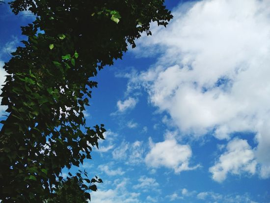 Tree Blue Nature Sky Low Angle View Day Growth Cloud - Sky No People Outdoors Branch Beauty In Nature Leaf Freshness