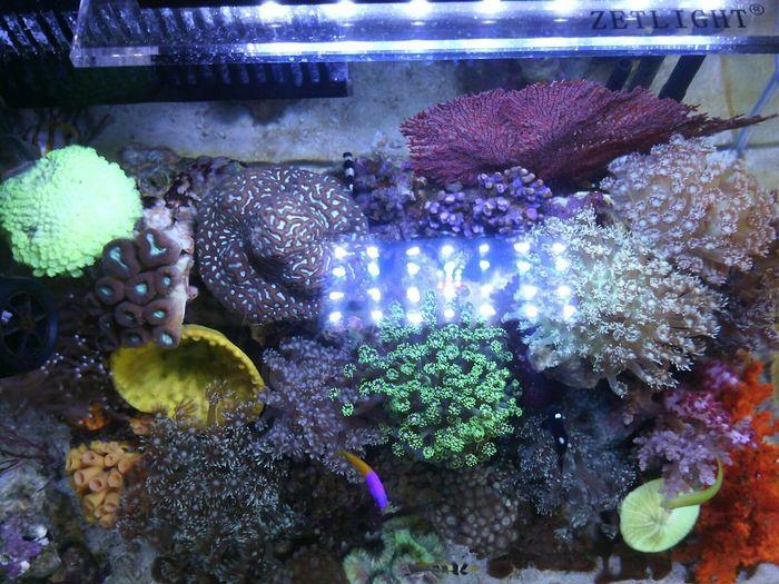 tampak atas Reeftank Saltwatertank Aquarium Indonesia_allshots Akuarium Laut Akuarium Marinelife Allshots All_shots Hobbies