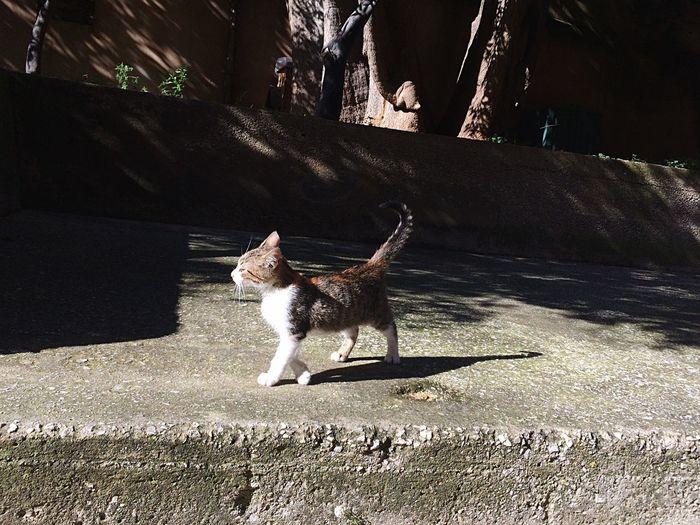 One Animal Animal Animal Themes Mammal Sunlight Pets Domestic Animals Cat Shadow No People Nature