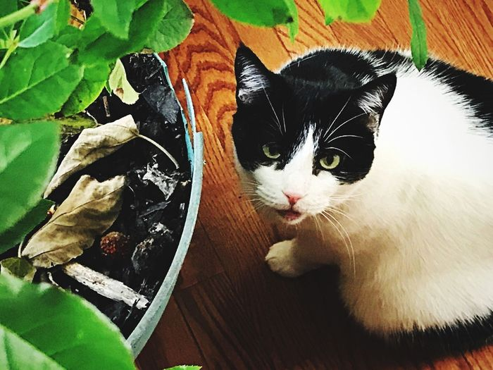Cat Pets Animal Themes Domestic Domestic Cat Mammal Feline Domestic Animals Animal One Animal Vertebrate