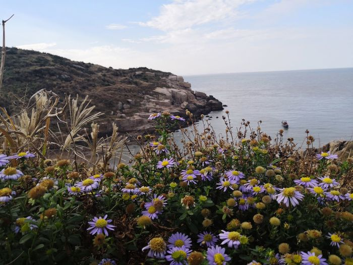 Flower Flowering Plant Plant Beauty In Nature Sea Growth Sky Nature Water Fragility Vulnerability  Freshness Land Scenics - Nature Day Horizon Over Water Tranquility Tranquil Scene Horizon No People