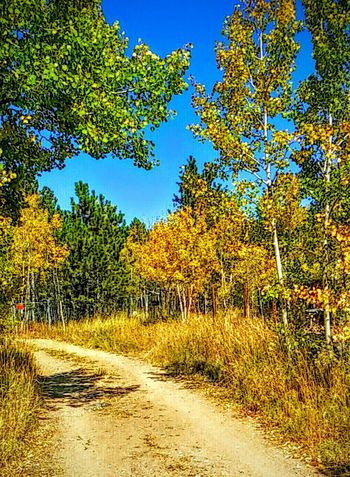 Colorado Fall nature Country Road Colors Of Autumn Golden Autumn In Colorado Hanging Out Enjoying Life Small Town USA Coloradophotographer Taking Photos Countryside travel EyeEm Landscapes With WhiteWall
