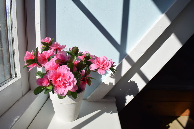 Architecture Beauty In Nature Close-up Day Fake Fake Flowers Flower Flower Head Fragility Freshness Growth Indoors  Nature No People Pink Color Plant Reflections Shade Shadow Shadows & Lights Window Window Frame