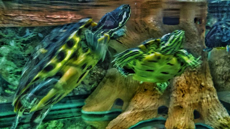 EyeEm Animal Lover Blurred Visions Ninja Turtles Swimming Turtle Power No People We Are Nature Beautiful Animals  Enjoy The New Normal Turtle Tag The EyeEm Collection