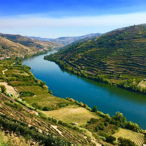 Douro  Wine Water Scenics Nature Beauty In Nature High Angle View Tranquil Scene Landscape Tranquility Mountain No People River Outdoors Day Travel Destinations Mountain Range Grass Tree Sky Green Color