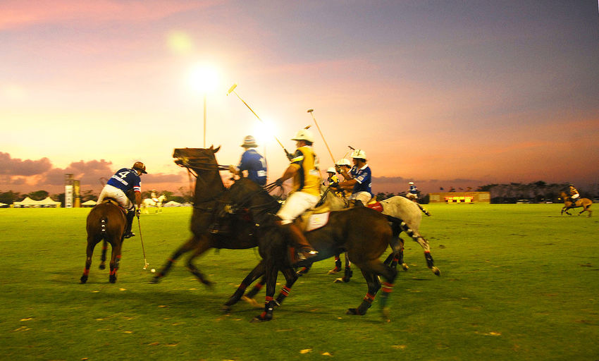 Atmosphere of the polo field in the a polo match Athletes are competing in both horse riding in Thailand. Bangkok Thailand. Green Color Light Activity Animal Wildlife Attack Clothing Competition Evening Field Grass Horse Light And Shadow Mammal Men Move Movement Outdoors People Polo Field Polo Match Real People Riding Sky Sport