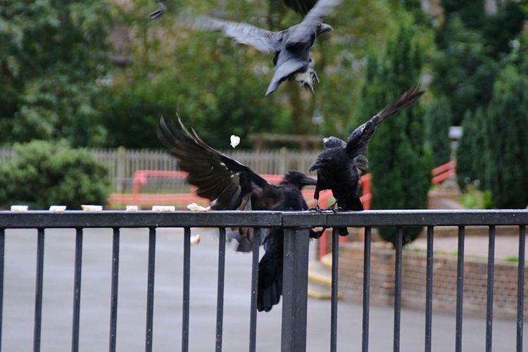 Bird flying over railing