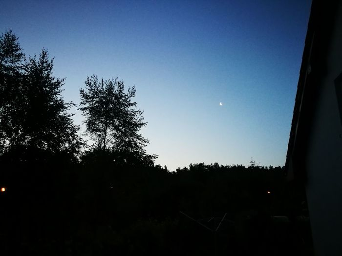 Goodnight! Dobranoc! ,DovreGoodnight Tree Nature Silhouette Sky No People Moon Beauty In Nature Tranquility Outdoors EyeEm Selects Clear Sky Day Scenics Astronomy Close-up