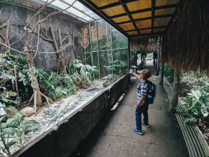 Rear view of boy standing by plants