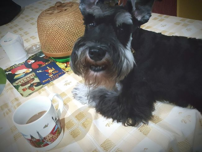 Hot coffee in the morning is all i need... good morning. . Positive Vibes Getting Inspired Be Happy Coffee Time Good Morning Baxter My Dog