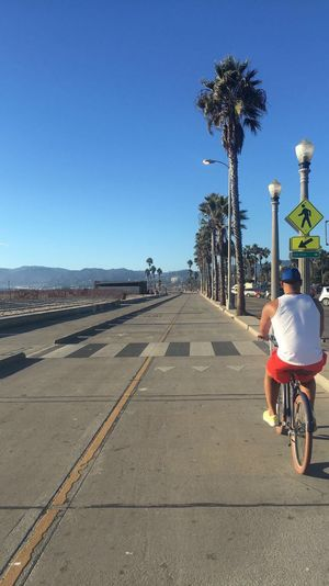 Young man cycling along pathway at beach in Santa Monica, California Outdoors Riding The Way Forward Palm Tree Clear Blue Sky Diminishing Perspective African American USA Sunlight One Man Only One Young Man Only Healthy Lifestyle Back View Vitality Coastline Santa Monica California Fun Summer Beach Bycycle Man One Person Cycling Landscapes With WhiteWall It's About The Journey
