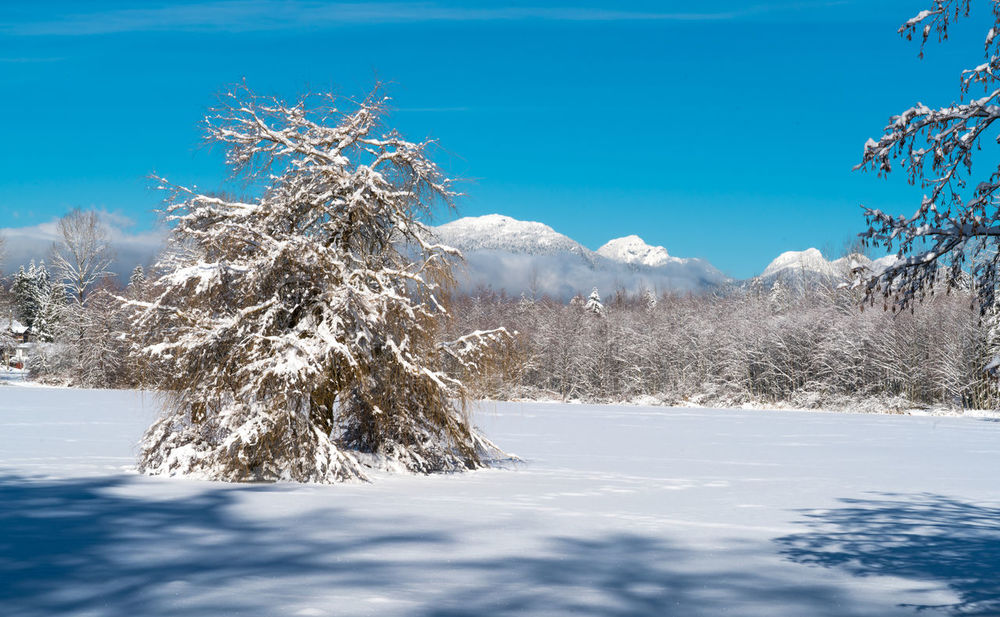 #beautifulbc #supernaturalBC #winter #wonderLand Beauty In Nature Blue Cold Temperature Day Landscape Mountain Nature No People Non-urban Scene Outdoors Scenics Sky Snow Tranquil Scene Tranquility Tree Winter