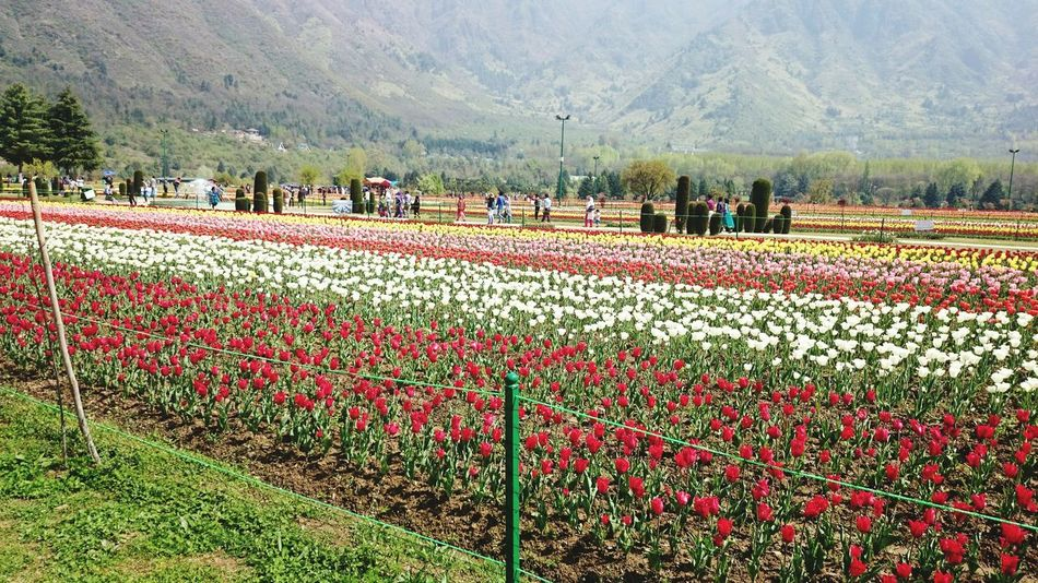 Flowers Tulips Taking Photos Loveforphotography Love_flowers Relaxing Taking Pictures People Watching Lovely View Beautiful World Beauty In Nature Beautiful View EyeEm Gallery EyeEm Best Shots Eye For Photography Photoshoot