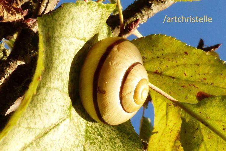 Escargot Dormir Nature Se Reposer