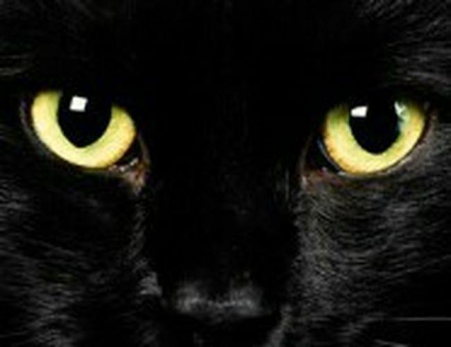 Visto por un gato!!😕