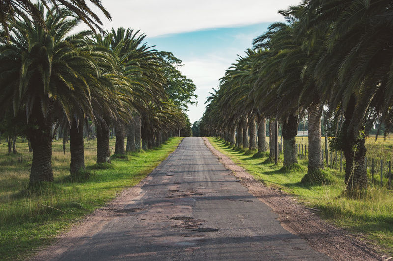 Road Amidst Palm Trees Against Sky