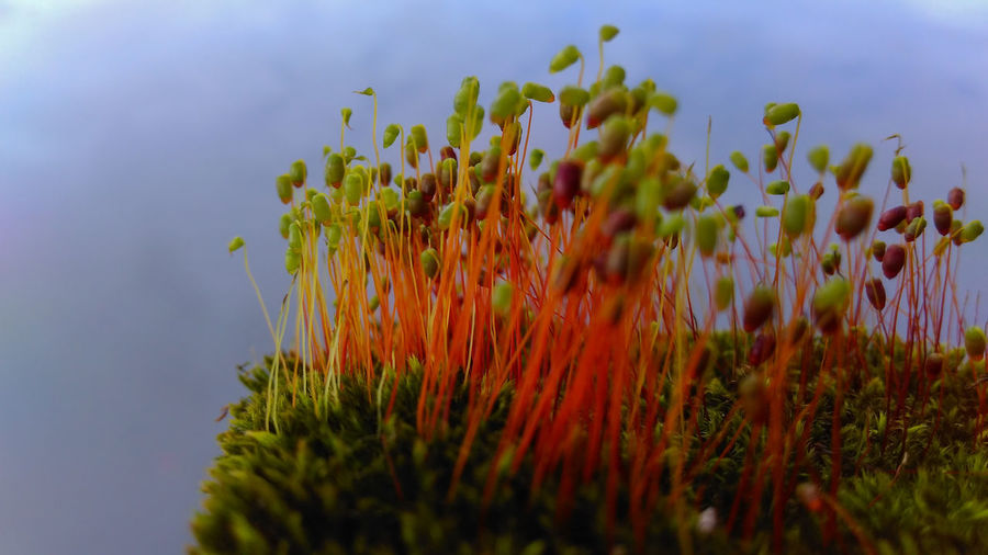 Nature Plant Growth Outdoors Landscape Beauty In Nature Flower Close-up Freshness No People Sky Perspectives On Nature Beauty In Nature Plants And Flowers Macro Nature Oldphoto Green Green Color