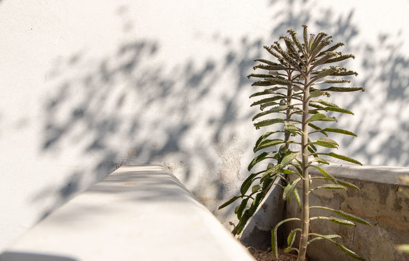 Close-up of potted plant on snow covered field